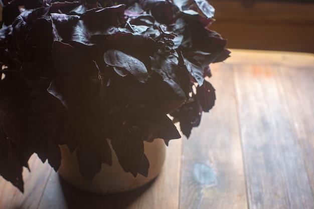 Comida vegetariana de dieta saludable fresca madura con vitaminas. albahaca morada