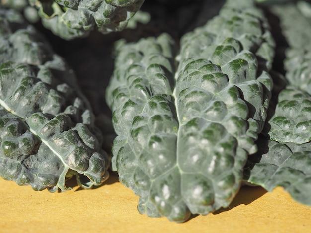 Comida de verduras de col rizada negra