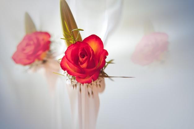 Completamente florecida, hermosa rosa roja con tallo y hojas en blanco, con reflejo