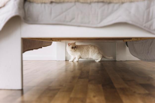 Composición adorable de mascota con gato blanco