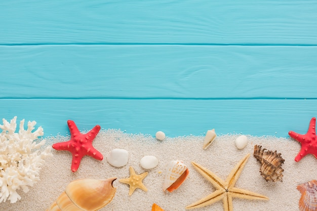 Composición aplanada de arena y conchas marinas.