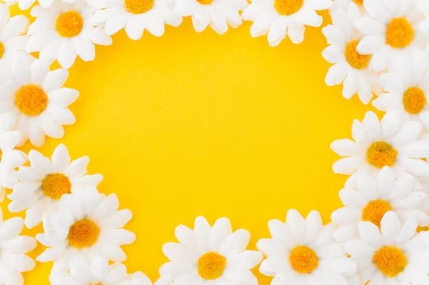 Composición en círculo de margaritas sobre fondo amarillo