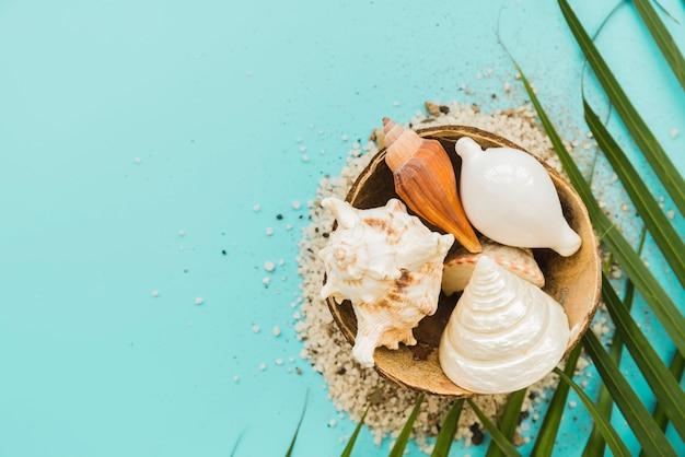 Composición de conchas marinas de arena y hojas.