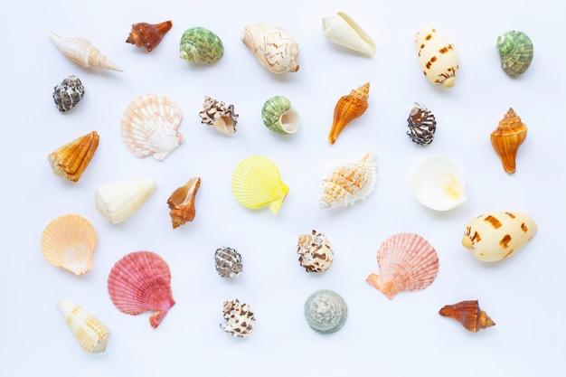 Composición de conchas marinas exóticas en blanco