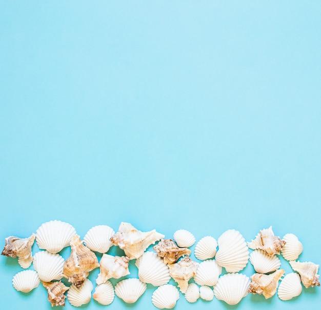 Composición de conchas marinas exóticas. concepto de verano lay flat. vista superior copyspace