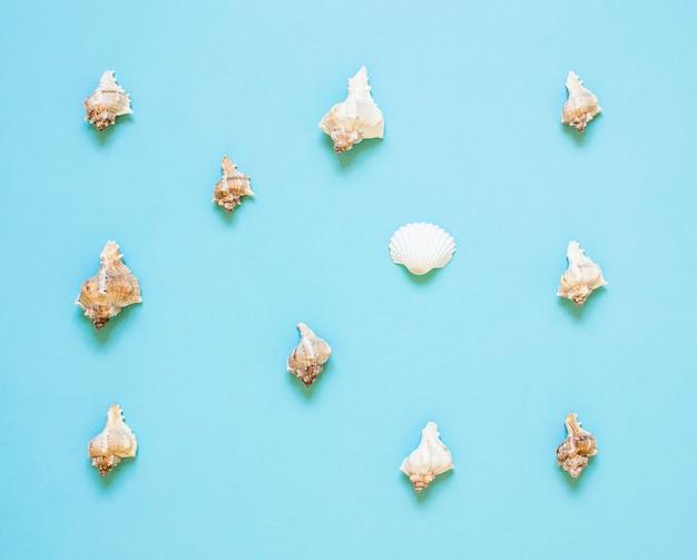 Composición de conchas marinas exóticas. concepto de verano lay flat. vista superior