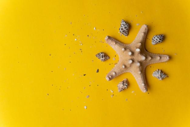 Composición de las conchas marinas exóticas sobre un fondo amarillo y azul. concepto de verano vista superior