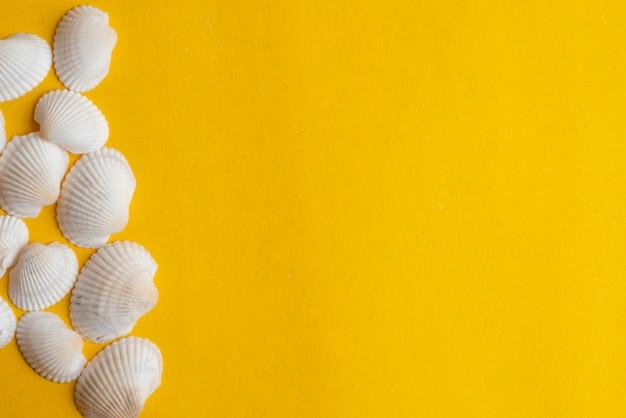 Composición de conchas marinas exóticas sobre una superficie amarilla.