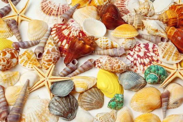 Composición de conchas marinas exóticas