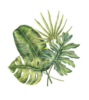 Composición de cuatro exóticas hojas de palmera tropical.