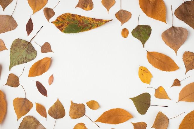 Composición de otoño con hojas marchitas