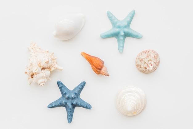 Composición de estrellas de mar y conchas marinas.