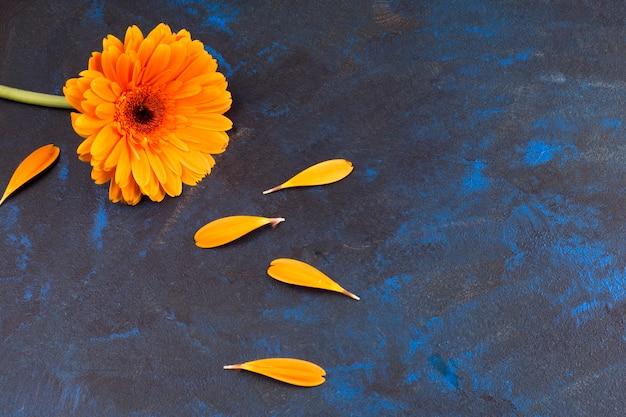 Composición de flor amarilla y pétalos.