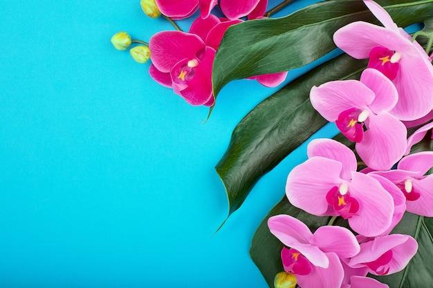 Composición de flora de orquídeas rosadas tropicales con hojas verdes tropicales