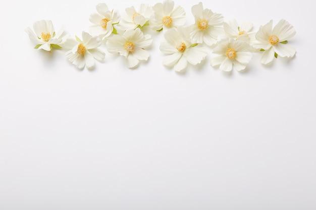 Composición floral hermosas flores arriba aisladas sobre pared blanca patrón de primavera. tiro horizontal