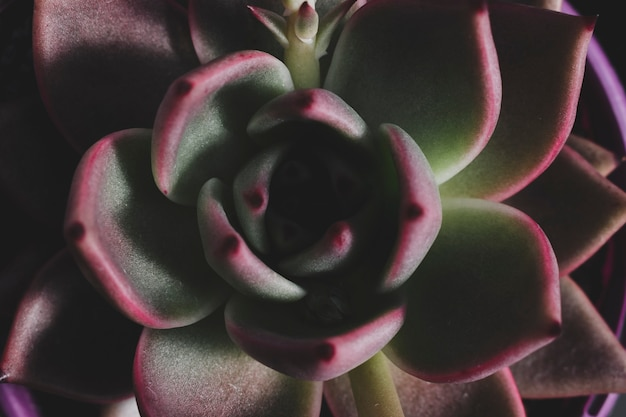 Composición floral moderna con estilo elegante