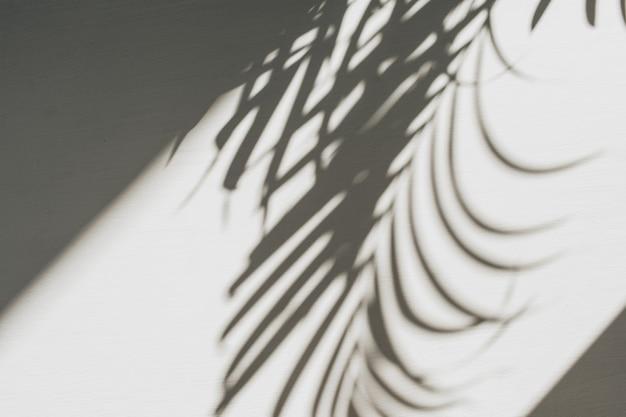 Composición floral neutra con silueta de rama de palmera tropical