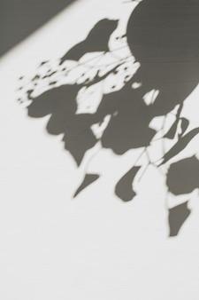 Composición floral neutra con sombra de silueta de rama de árbol