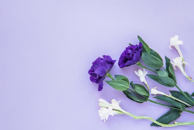 Composición de flores blancas y azules.