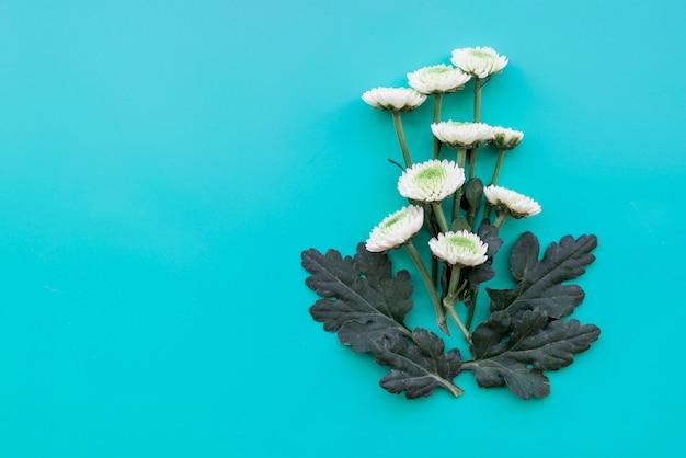 Composición con flores blancas sobre fondo azul