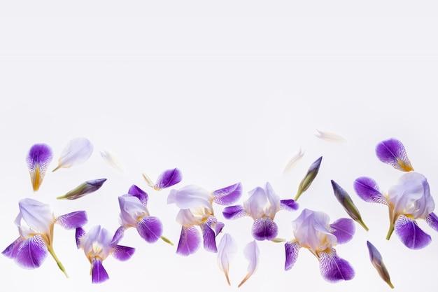 Composición de flores iris de flores púrpuras sobre mármol blanco.
