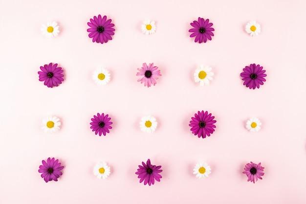 Composición de flores en superficie rosa