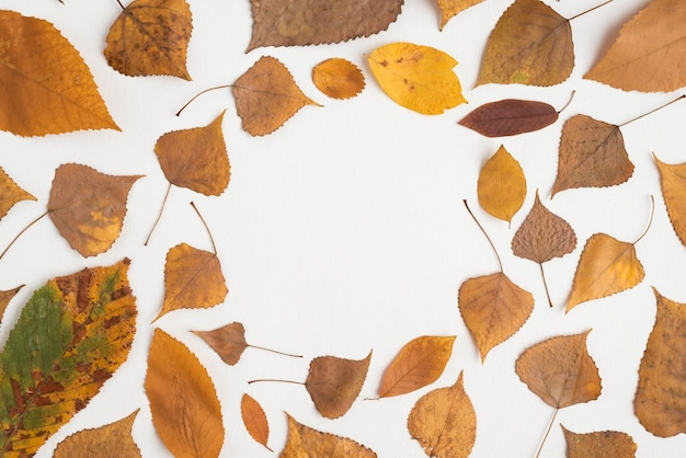 Composición de hojas de otoño formando círculo