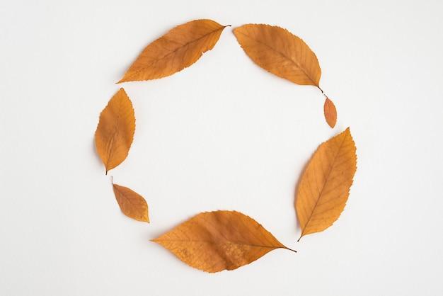 Composición de las hojas de otoño formando círculo