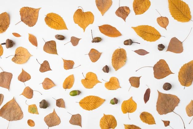 Composición de hojas secas y bellotas
