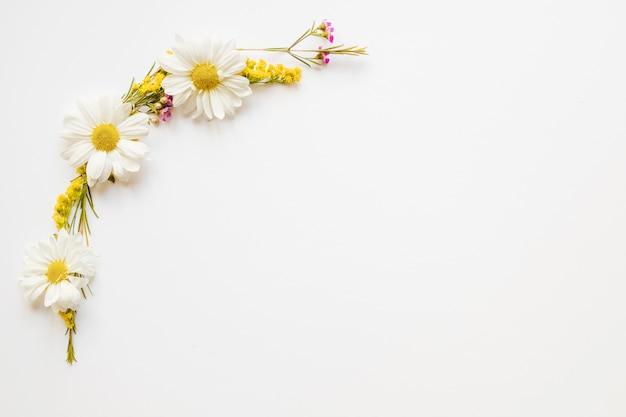 Composición linda de las manzanillas
