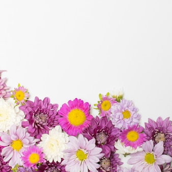 Composición de maravillosas flores brillantes.