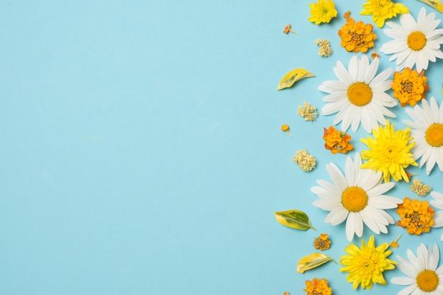 Composición de maravillosas flores brillantes