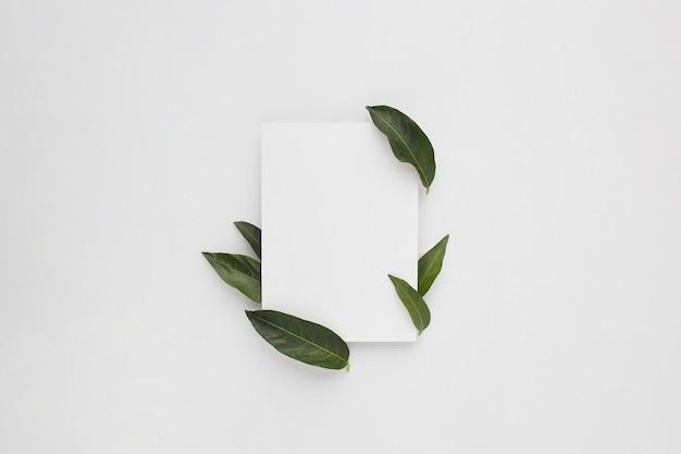 Composición mínima con un papel en blanco con hojas verdes, vista superior