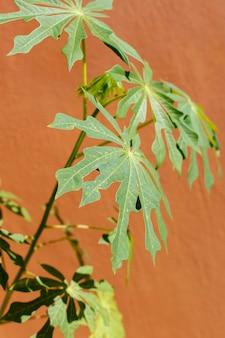 Composición minimalista de planta natural sobre un fondo monocromático