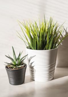 Composición minimalista vertical de dos plantas en maceta.