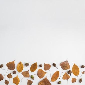 Composición de otoño con bellotas