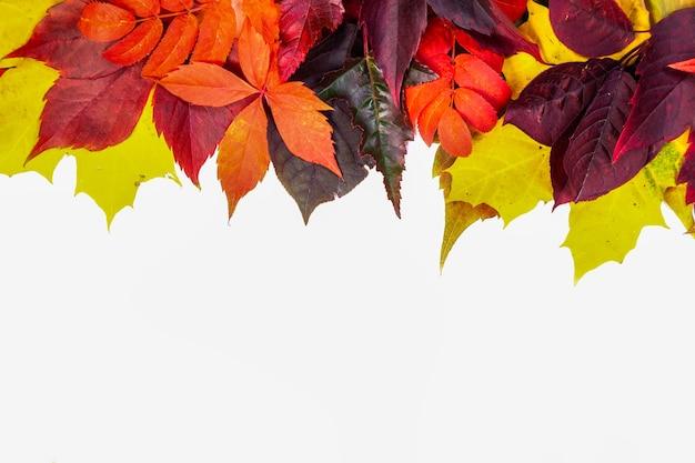 Composición de otoño, hojas de colores otoñales en fondo blanco