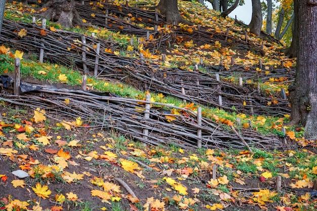 Composición de otoño de hojas de zarzo y otoño.