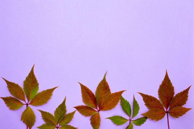 Composición de otoño, lugar para la inscripción. hojas verdes y marrones, ciruela, sobre un fondo morado claro. endecha plana, vista superior, copyspace