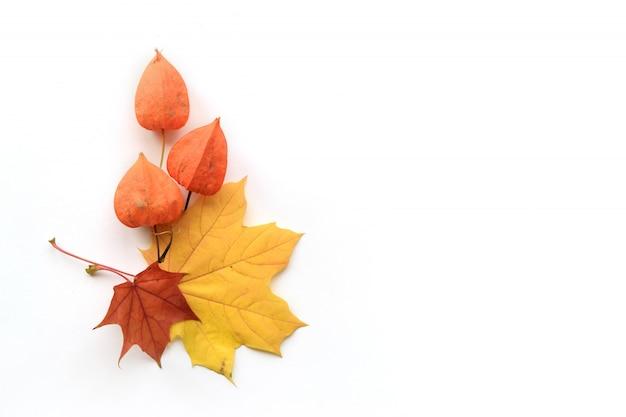 Composición de otoño de marco de hojas de arce y physalis sobre fondo blanco. vista plana, vista superior