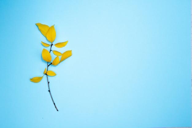 Composición de otoño, marco de hojas. rama con hojas amarillas, ciruela, sobre fondo azul claro