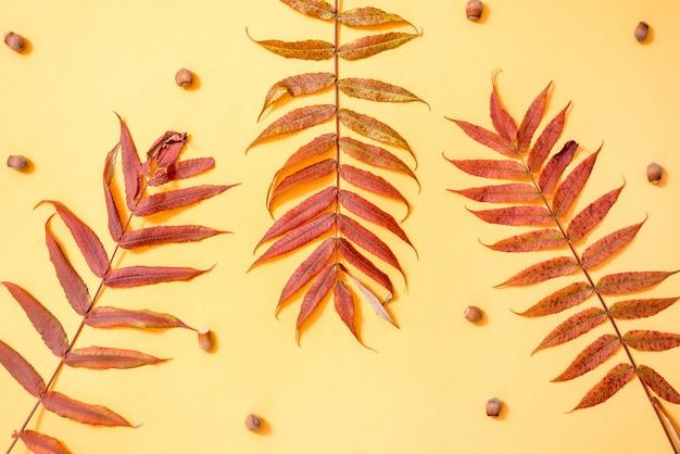 Composición de otoño. patrón hecho de hojas doradas de otoño flat lay, vista superior, copyspace