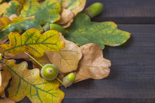 Composición de otoño. ramo de coloridas hojas de otoño