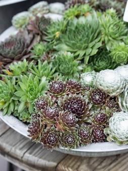 Composición de pequeños cactus y suculentas en un tazón
