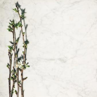 Composición plana con hermosas ramas de cerezo de primavera sobre fondo de mármol blanco