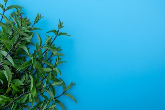 Composición plana con hojas de menta fresca sobre fondo de color azul