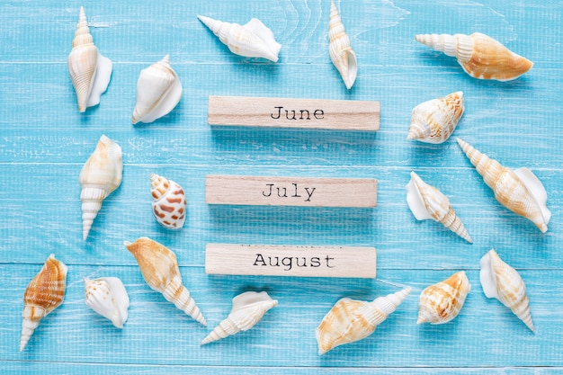 Composición plana de verano con conchas de mar