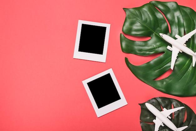 Composición de planos de marcos instantáneos y hojas de plantas.