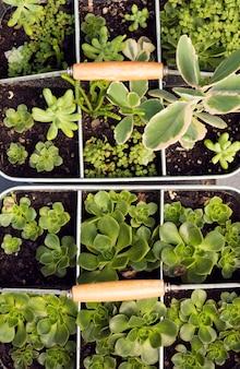 Composición de plantas verdes en macetas.