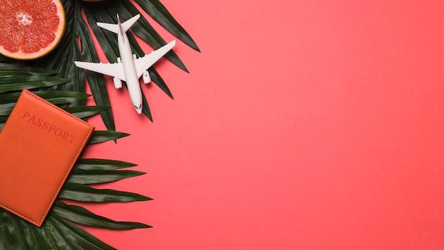Composición de pomelo pasaporte juguete y planta